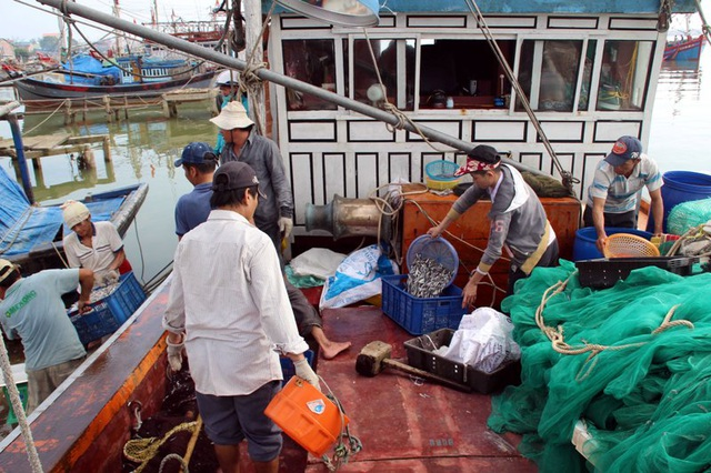 Những chuyến tàu đi biển trở về đầy ắp cá
