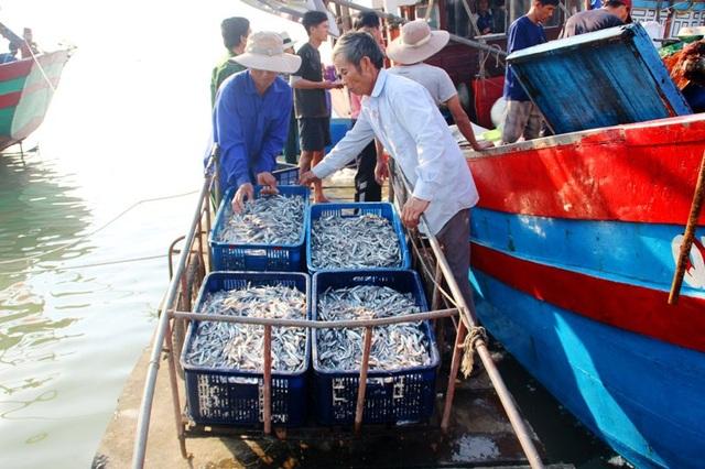 Mỗi tàu cá của ngư dân đánh bắt được hơn 2 tấn