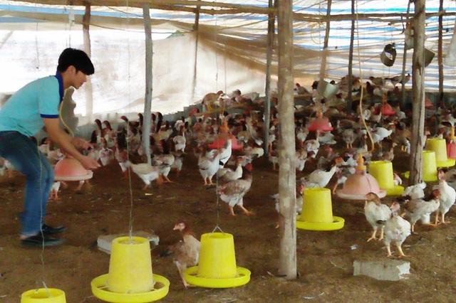 Nguyễn Văn Tuân với mô hình trang trại của mình