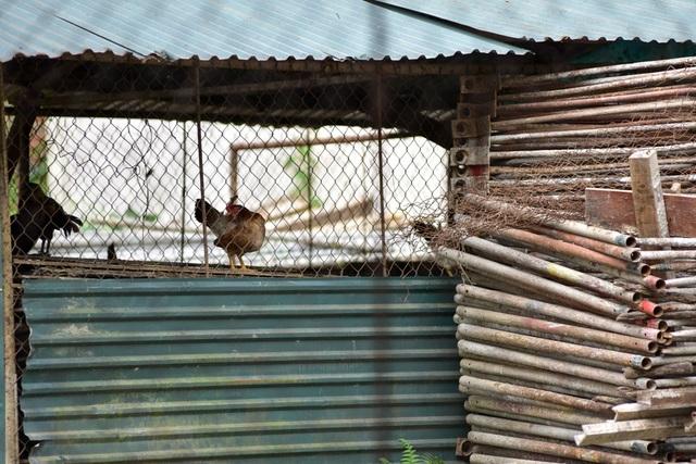Vật liệu xây dựng xếp đống, nằm im đã lâu. Thậm chí đây còn là nơi chăn nuôi gà của những người dân sống xung quanh khu vực.