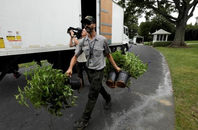 Các nhân viên của Cục Công viên Quốc gia Mỹ mang các chậu cây từ xe tải vào khuôn viên Nhà Trắng.