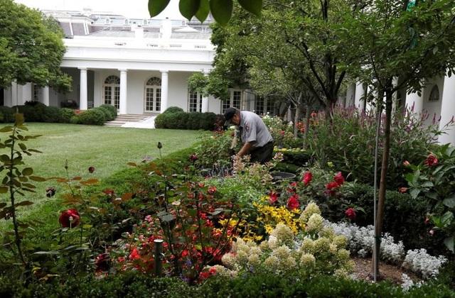 Khu vực Vườn Hồng Nhà Trắng cũng được tân trang lại dưới bàn tay của các nhân viên Cục Công viên Quốc gia Mỹ.