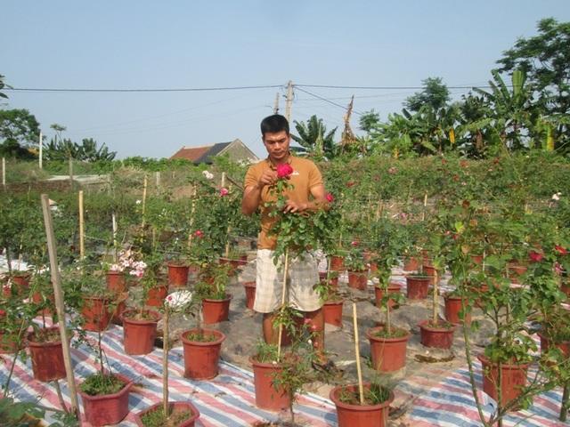 Anh Phạm Văn Trọng thu tiền tỷ mỗi năm và tạo công ăn việc làm ổn định cho 4 lao động thường xuyên và hàng chục lao động mùa vụ nhờ trồng hoa hồng