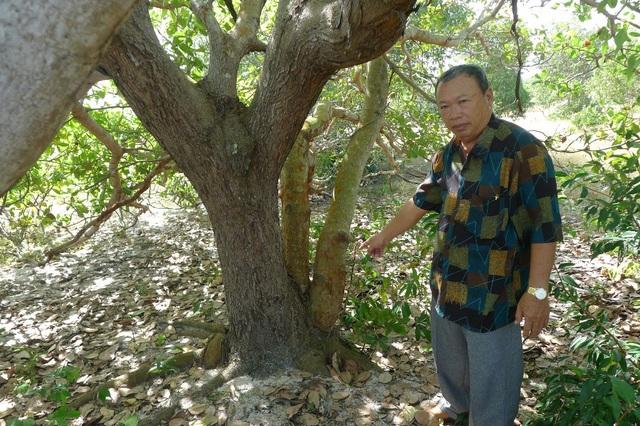 Ông Nguyễn Âu cho biết, ông trồng cây đào này từ năm 1992
