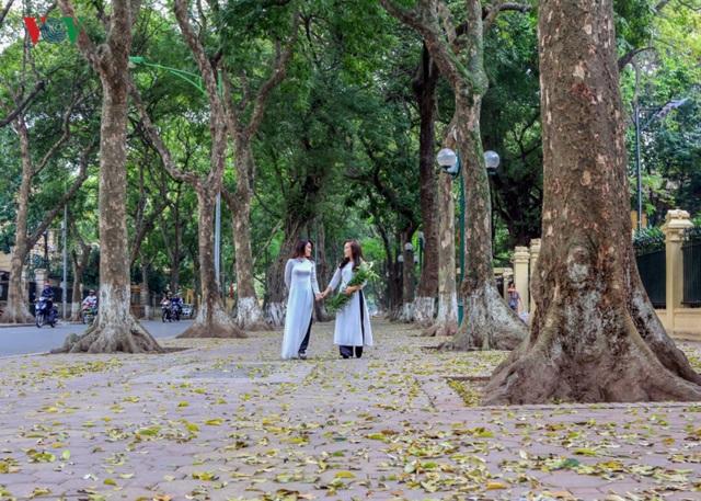Không chỉ cho bóng mát, hàng cây trên phố Phan Đình Phùng còn là địa điểm chụp ảnh ưa thích của nhiều người.