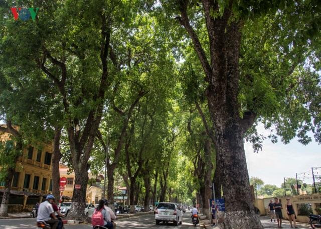 Phố Hoàng Diệu, một trong những con đường đẹp nhất Hà Nội...