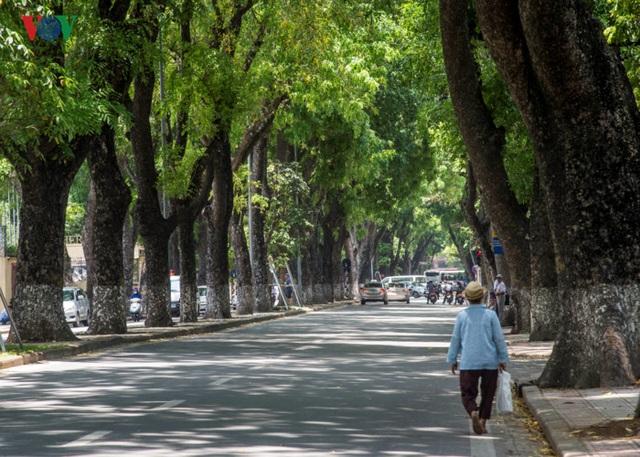Nhiều mảng bóng mát xuất hiện trên phố Nguyễn Tri Phương vào những ngày hè oi ả nhờ hàng cây xà cừ có tán lá rộng che phủ.