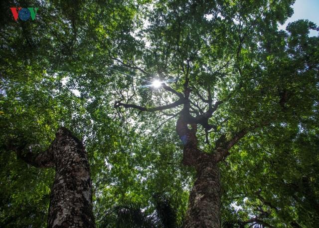 Những tuyến phố có hàng cây rợp bóng mát đẹp nhất Hà Nội - 14