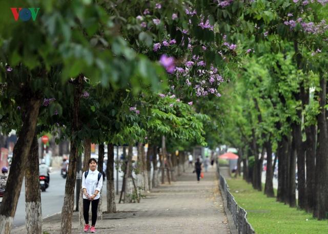Hàng cây trên đường Kim Mã...