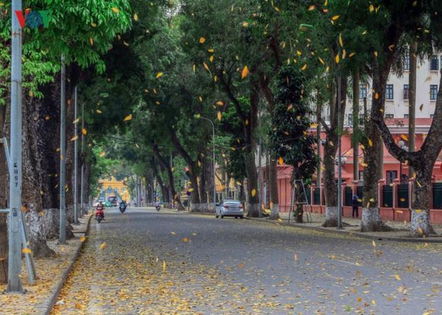 Ngoài ra cũng phải kể đến hàng cây trên đường Hoàng Văn Thụ dẫn đến Phủ Chủ Tịch.