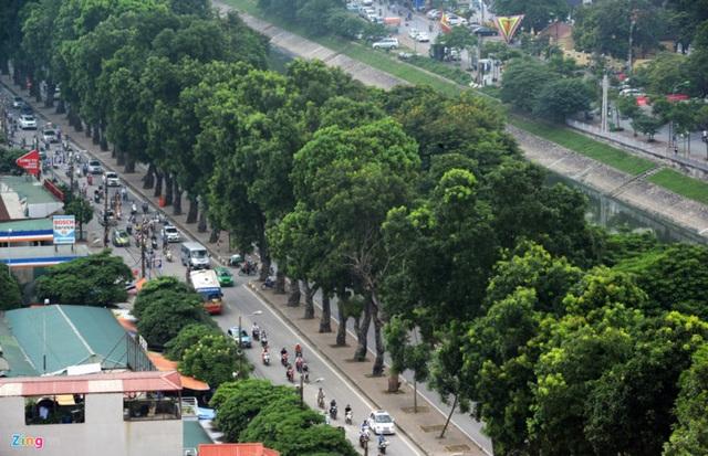 Cây xanh trên nhiều tuyến đường, phố thậm chí đã đi vào thơ ca trong lịch sử. Trong ảnh là khu vực đường Láng, một trong những nơi có hàng cây giữa dải phân cách đẹp nhất Hà Nội. (Ảnh: Zing)