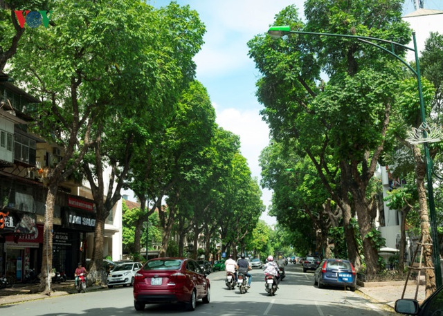 Các tuyến phố xung quanh hồ Hoàn Kiếm như Hai Bà Trưng, Trần Hưng Đạo, Bà Triệu, Lý Thường Kiệt, Hàng Bài, Tràng Thi... cũng là những nơi có nhiều cây xanh tỏa bóng mát.