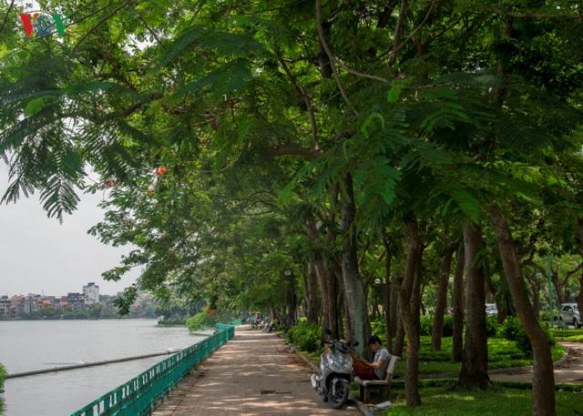Hàng cây ven hồ Tây trên đường Thanh Niên. Dù giữa trưa nhưng vẫn có người ngồi dưới bóng cây đọc sách. Một trong những điểm đi dạo, tập thể dục ưa thích của người dân bởi không khí trong lành, cảnh quan đẹp.