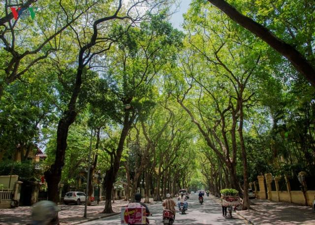 Phố Phan Đình Phùng, nơi có hàng cây sấu nổi tiếng với những thảm lá vàng rụng vào đầu hè.