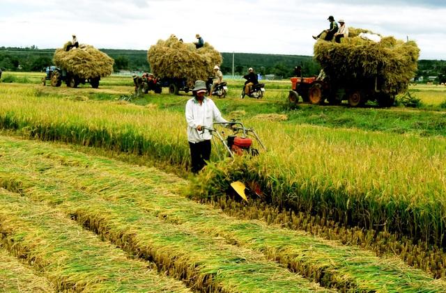 Chính phủ vừa ban hành Quyết định tái cơ cấu ngành nông nghiệp từ năm 2017 - 2020