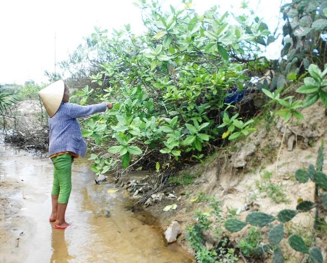 Người dân phản ánh, các hồ nuôi tôm xả thải bẩn ra môi trường