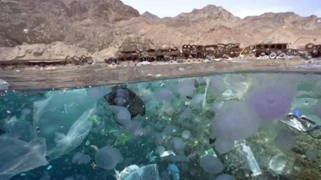 Trải nghiệm bơi trong đại dương rác và lời cảnh tỉnh về ý thức của con người - 2