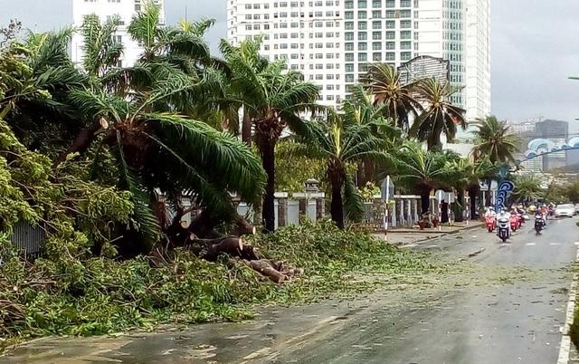Hàng dừa trước UBND tỉnh Khánh Hòa bị đổ rạp trước cơn cuồng phong sáng 4/11