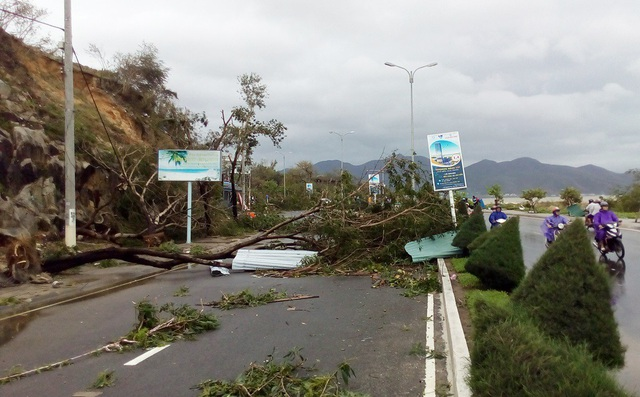 Cây xanh trên đường Phạm Văn Đồng TP Nha Trang đổ ngã hàng loạt