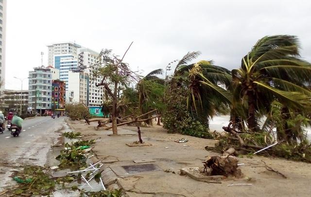 """Hàng cây chống bão ven biển Nha Trang """"đổ rạp"""" trước bão số 12 - 4"""