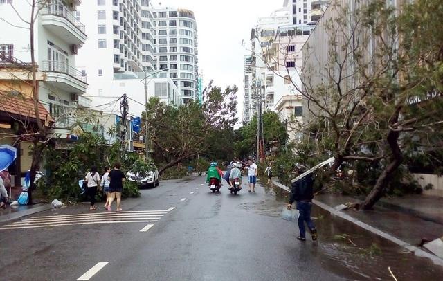 """Hàng cây chống bão ven biển Nha Trang """"đổ rạp"""" trước bão số 12 - 7"""
