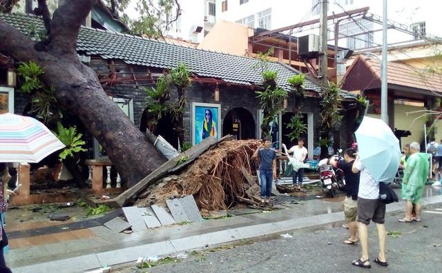 Cây cổ thụ gần đường Trần Phú bị bật gốc, đổ ngã đè lên một ngôi nhà cổ ở gần đó