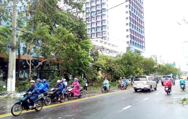 Hàng cây xanh trên đường Trần Phú te tua sau bão số 12. Cơn bão tàn phá rất khủng khiếp trong vòng vài chục năm qua, một người dân nhận định