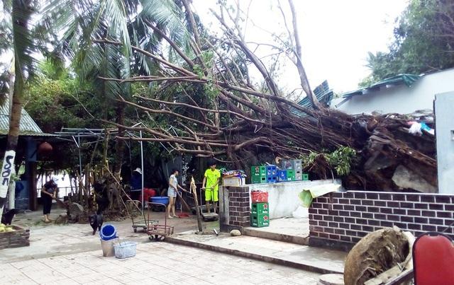 """Khánh Hòa """"oằn mình"""" sau bão,  23 người tử vong! - 2"""