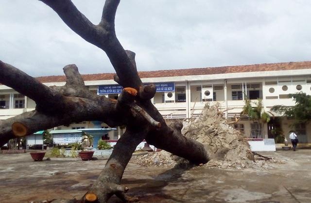 Hàng loạt trường học bị tốc mái, hư hỏng nặng do bão Damrey - 6