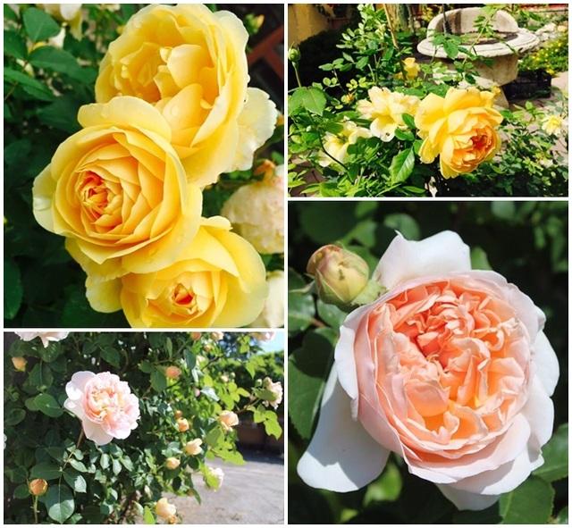 Đủ loại mọi hoa tạo nên vẻ đẹp hiếm có cho khu vườn