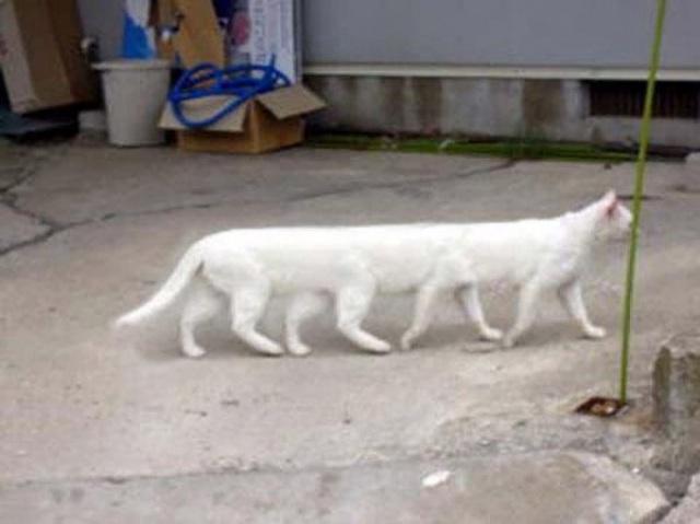 Bạn khó có thể bắt thú cưng của mình đứng yên, khi đang thực hiện kiểu ảnh toàn cảnh. Hệ quả là những giống động vật mới sẽ được ra đời. Chẳng hạn như một chú mèo siêu dài…