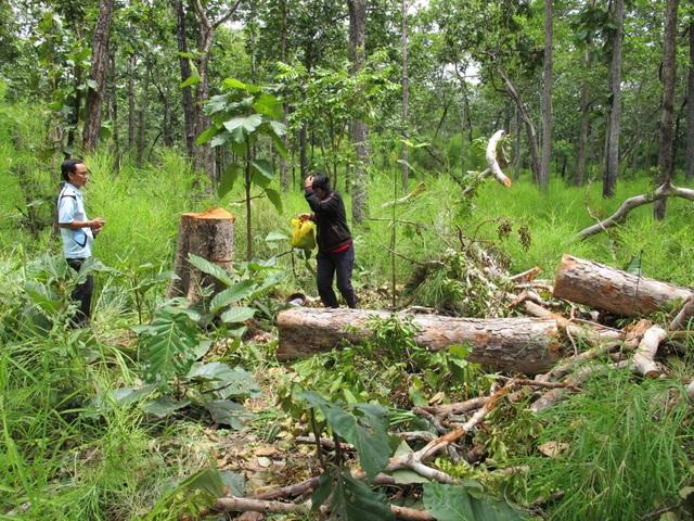Nếu địa phương nào có diện tích rừng tự nhiên giảm trong năm 2016, sẽ phải làm rõ trách nhiệm từng cá nhân, tập thể (Ảnh minh họa: Viết Hảo).