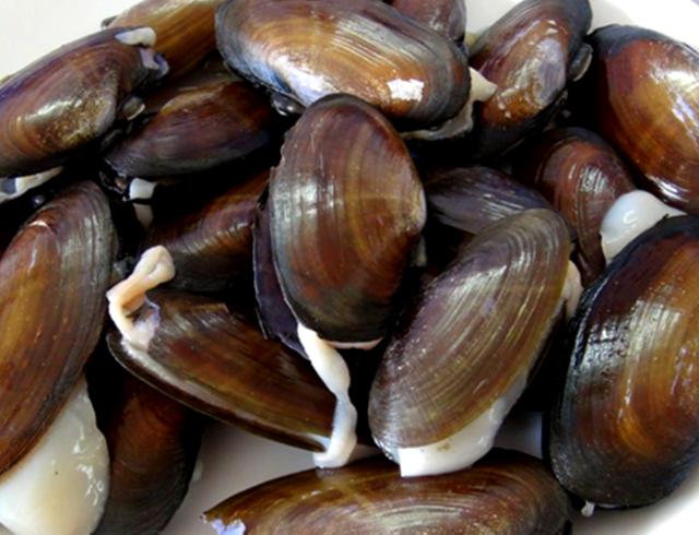 Phi thường chỉ dài khoảng 10 cm. Khi ăn, mùi vị chẳng khác gì con trai biển.