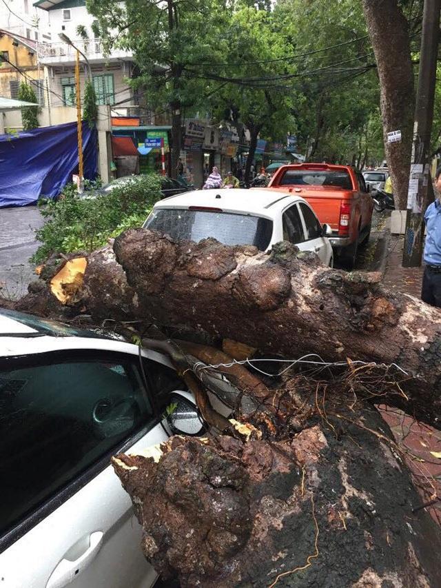 Cây đổ đè xe ô tô trên đường phố Hà Nội. (Ảnh: Gia Bảo).