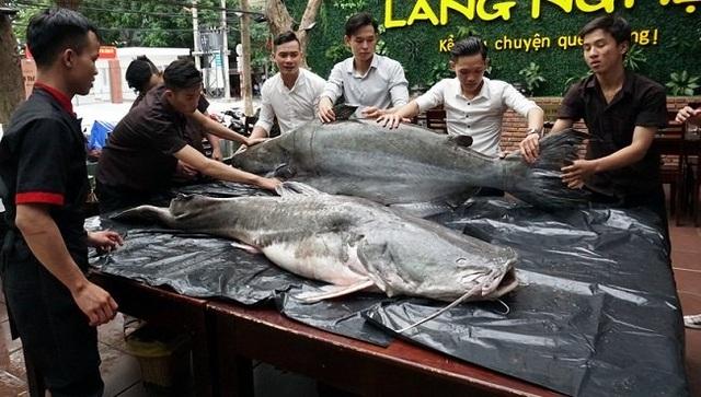 Cặp thủy quái 200kg gây xôn xao Đà Nẵng