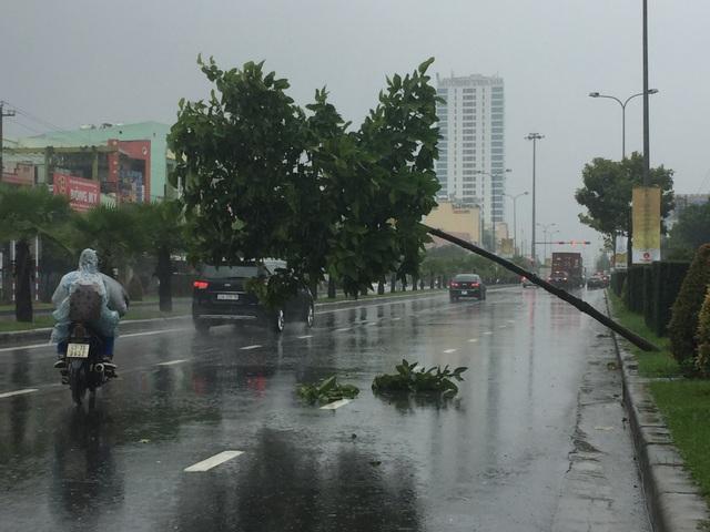 Tại Đà Nẵng, mưa to gió lớn liên tục từ chiều tối 3/11 đến 10h sáng nay 4/11 chưa có dấu hiệu dứt (ảnh: một cây xanh nghiêng ngả trên đường Ngô Quyền)