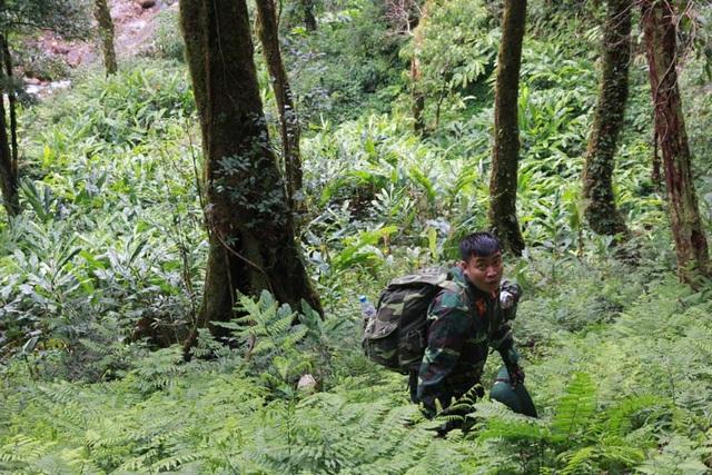 Kỳ bí rừng chè cổ thụ 1.000 năm tuổi 1.500m trên đỉnh Khang Su Văn - 1