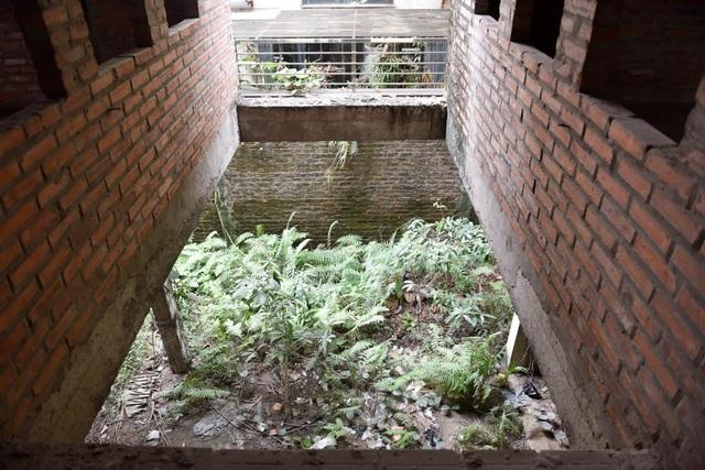 Bên trong biệt thự, các bức tường xây thô đã phủ rêu xanh, cây cỏ dại mọc um tùm.
