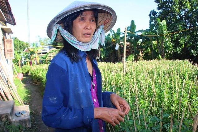 """Bà Trần Thị Minh (làng Bình Lâm) buồn bã vì gần Tết nhưng cúc vẫn """"điếc"""" chưa chịu ra hoa. Ảnh: Dũ Tuấn"""