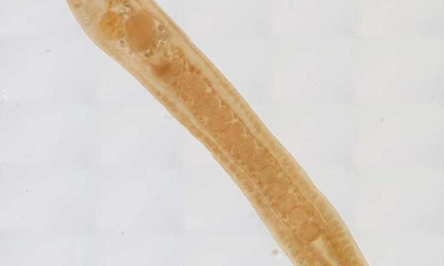 Biến đổi khí hậu có thể giết chết các vật ký sinh trùng - 1