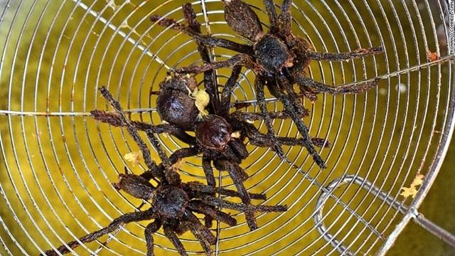 Món nhện rán tại Campuchia. (Nguồn: CNN)