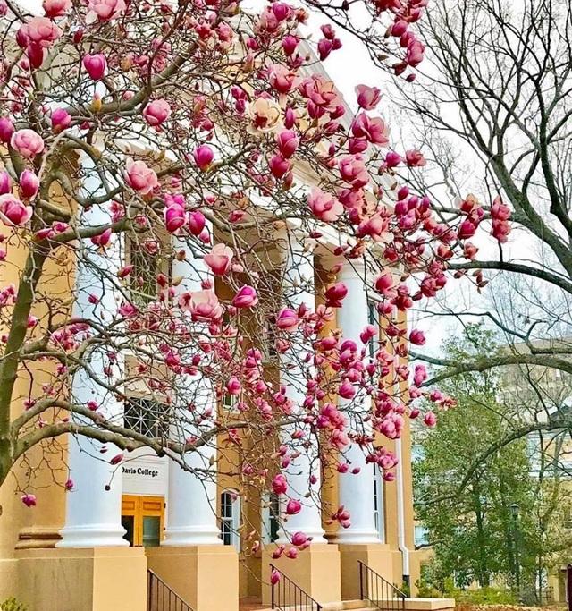 Khung cảnh mùa xuân tại nước Mỹ