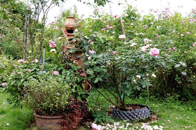 Điểm đến hấp dẫn cho người đam mê hoa hồng dịp 30/4 tại Hà Nội - 2