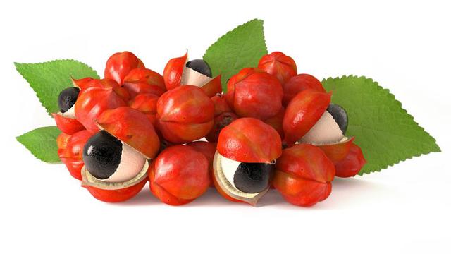 Hạt guarana do có nhiều thành phần như các alkaloid, chất béo, tanin làm chậm quá trình giải phóng caffein từ hạt. Chính vì thế caffein không bị giải phỏng ồ ạt, và tác dụng kích thích tăng sự tỉnh táo kéo dài hơn mà không gây chóng mặt, bồn chồn.