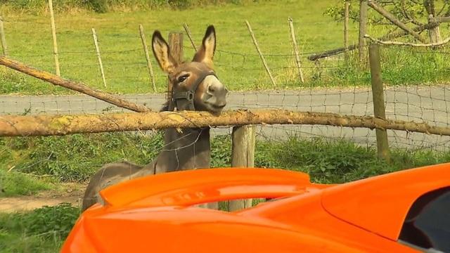 Chiếc xe màu cam bị nhầm thành củ cà rốt khổng lồ