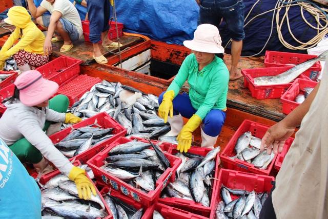 Tranh thủ bán số cá vừa đánh bắt trên biển