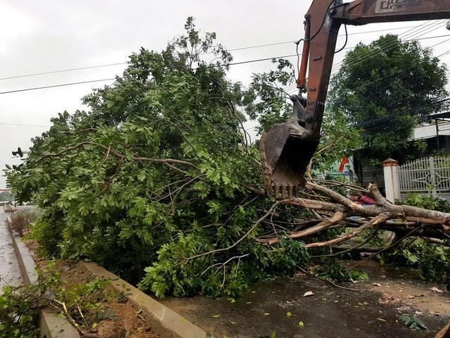 Các cây xanh trên địa bàn thị xã Ayun Pa bị bật gốc, chắn ngang đường