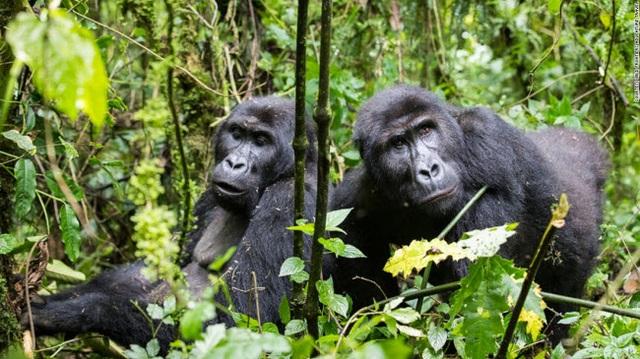 Những tour khám phá động vật hoang dã hấp dẫn nhất thế giới - 11