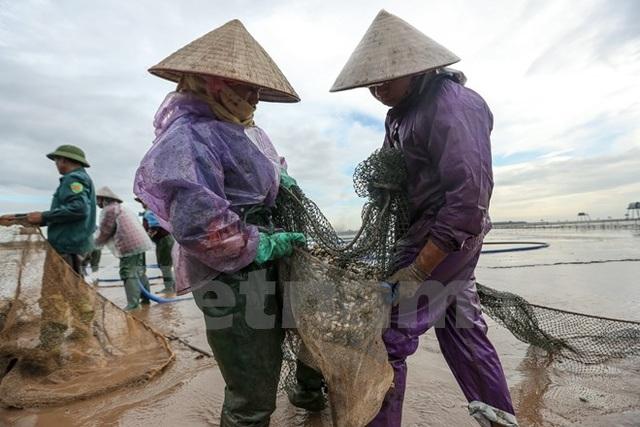 Thái Bình: Kiếm tiền triệu từ nghề cào ngao thuê ở Đồng Châu - 11
