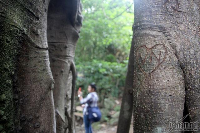 """Cây 800 tuổi ở Đà Nẵng """"đau đớn"""" vì chằng chịt """"lời tỏ tình"""" - 11"""